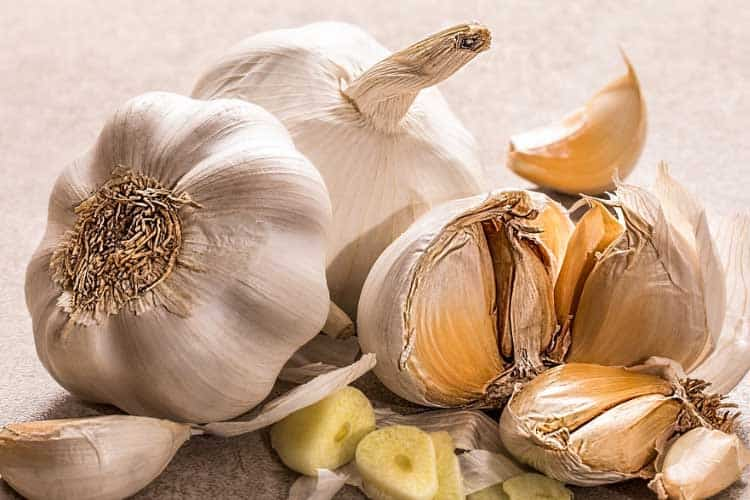 garlic is toxic to dogs