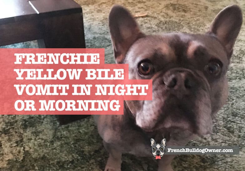 why does my French bulldog throw up in the morning