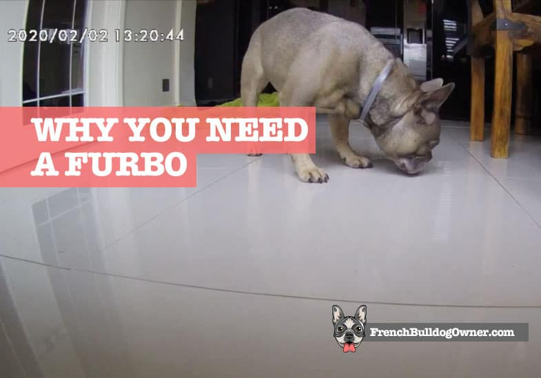 why should i get a Furbo