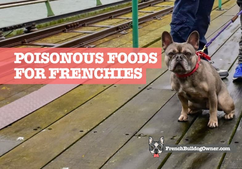 Poisonous foods for French bulldogs