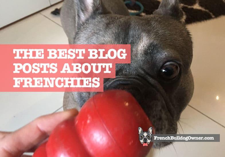 best french bulldog blogs