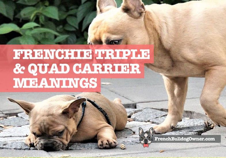 Quad Carrier French Bulldog