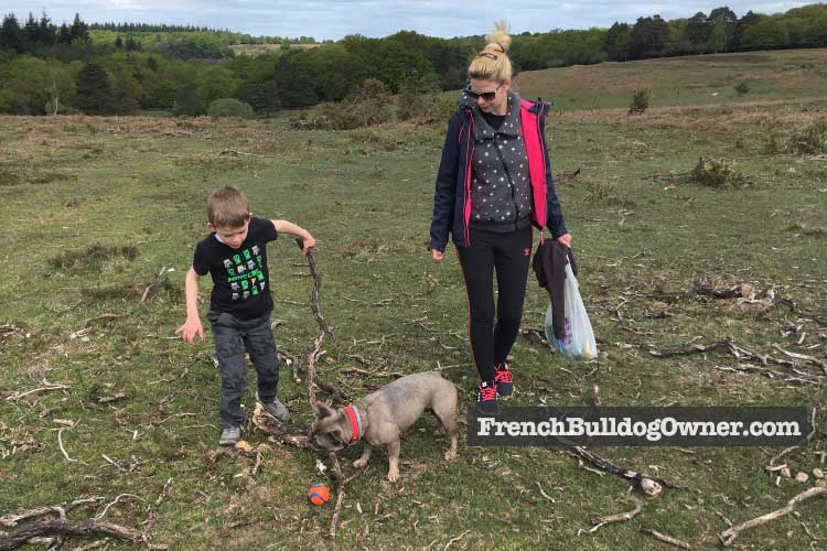 french bulldog walking distance