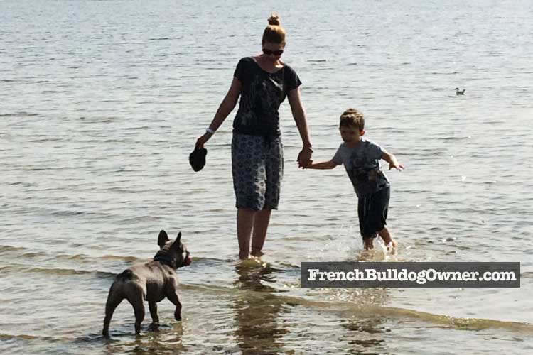 frenchie in sea