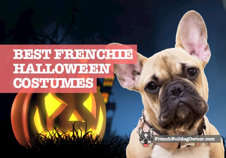best french bulldog Halloween costumes