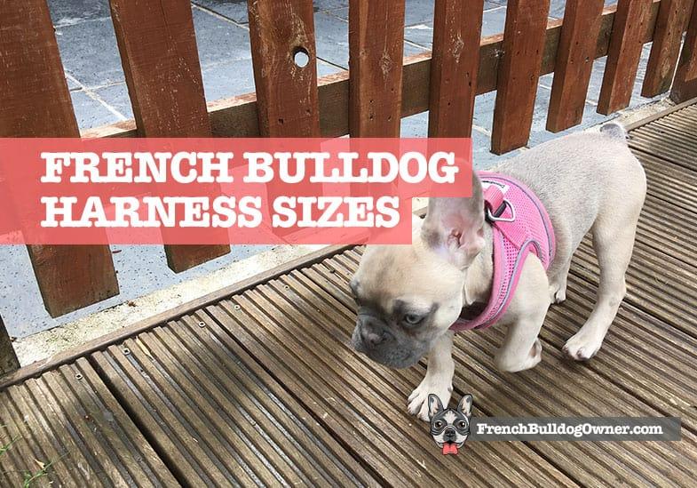 french bulldog harness size