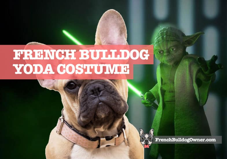 french bulldog yoda costume
