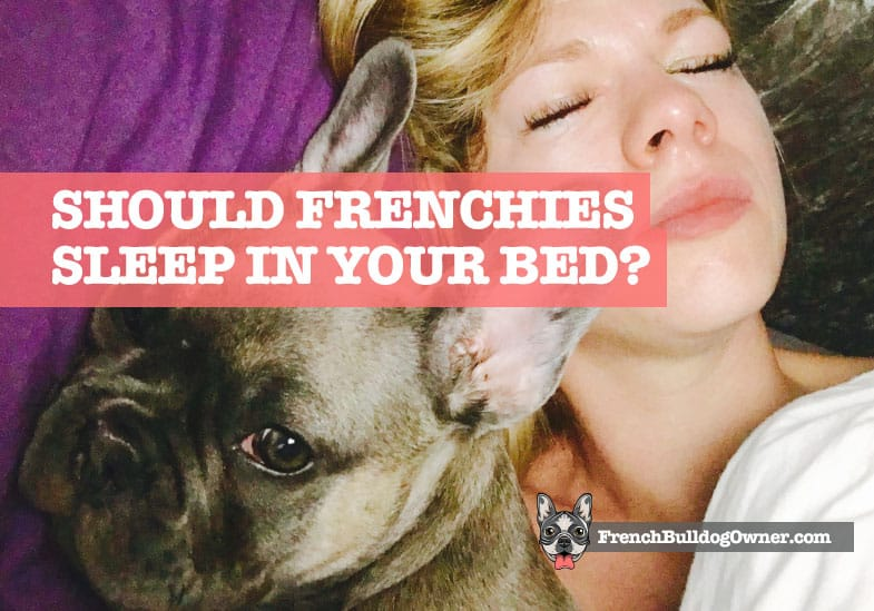 french bulldog sleeping in your bed
