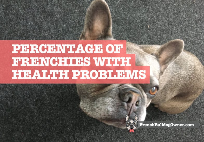 What Percentage of French Bulldogs Have Health Problems