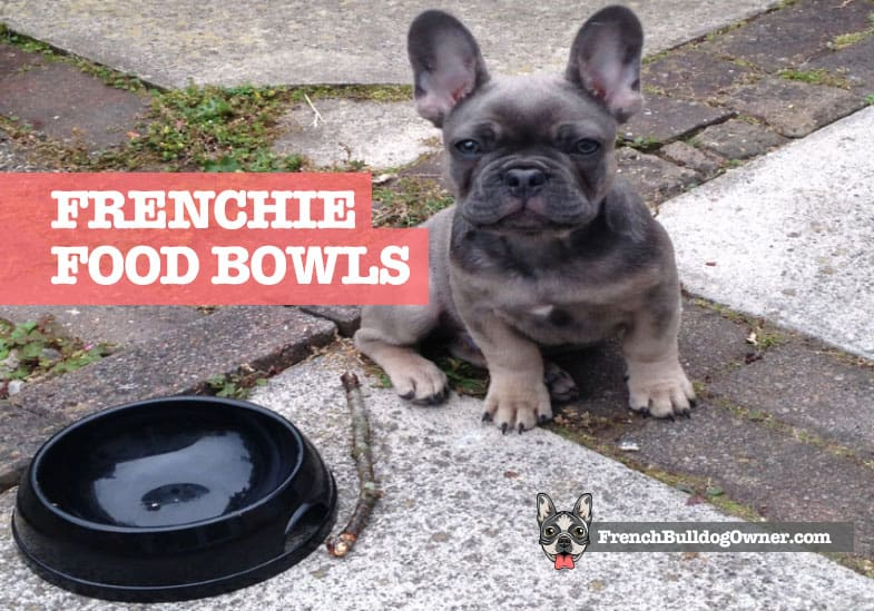 best french bulldog bowl