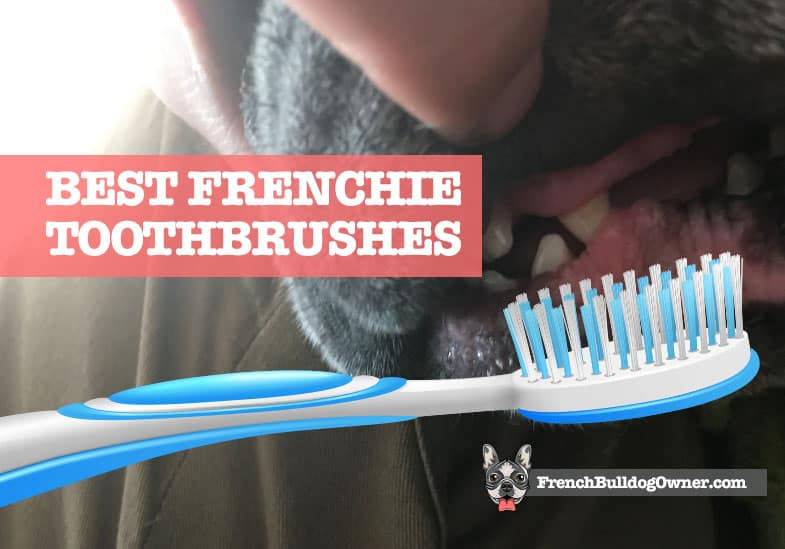 best french bulldog toothbrush