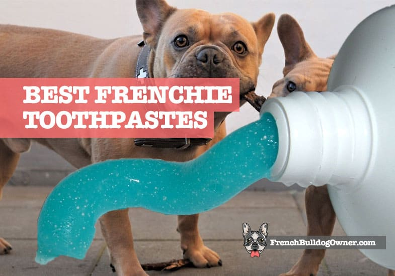 Best French Bulldog Toothpaste