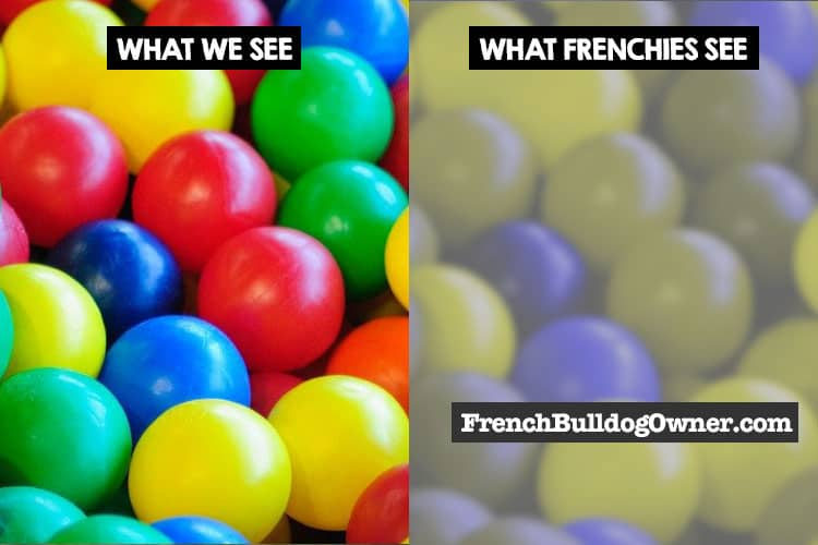 frenchies dont see red colors