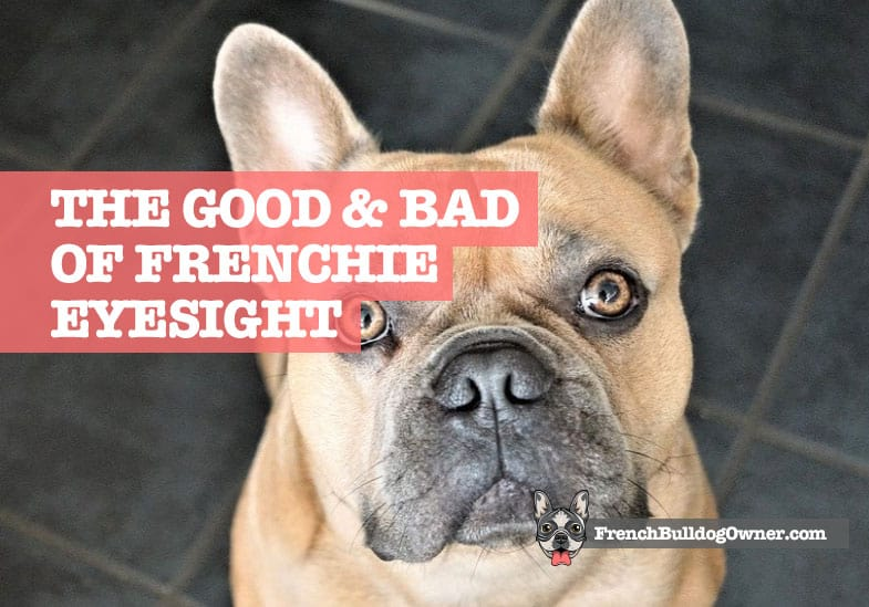 Do French Bulldogs Have Bad Eyesight