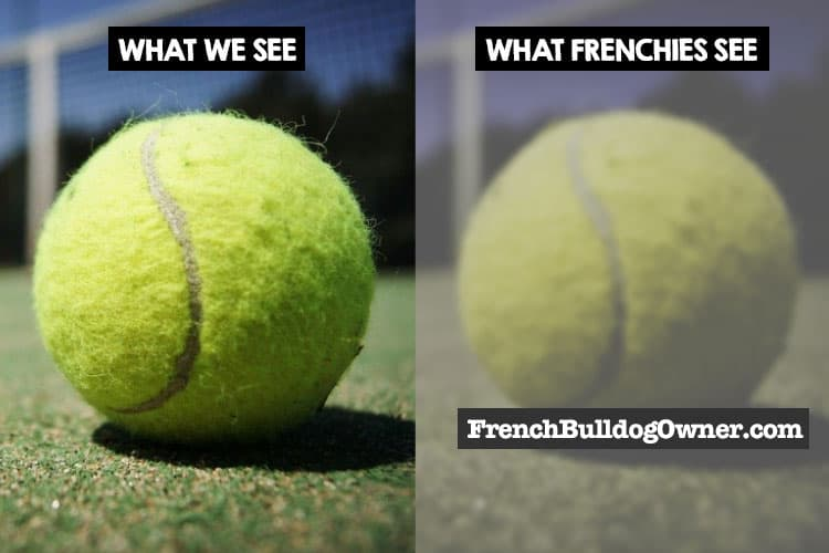 what frenchies see
