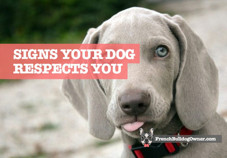 how to tell your dog respects you